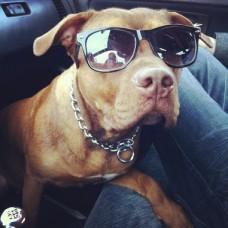 sunglasses marley