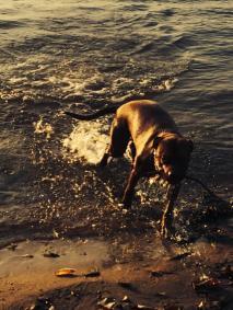 swimming Marley